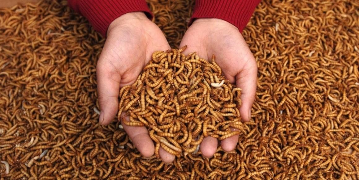 СК: Зачем детей в школах кормят червями