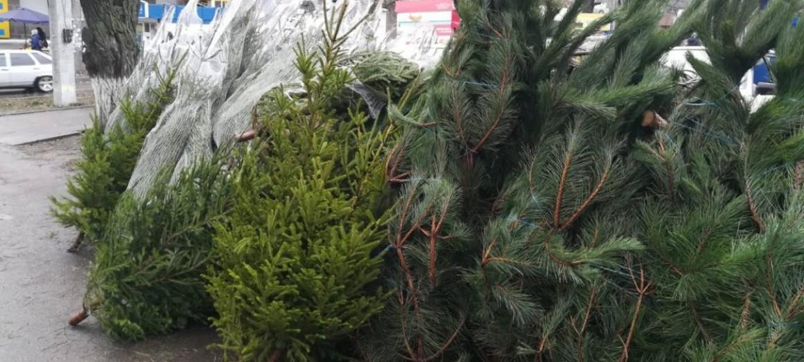 Где купить елку в Ульяновске. Адреса елочных базаров