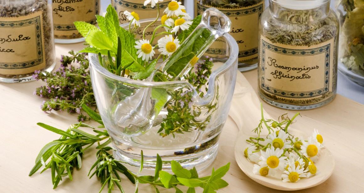 Минсельхоз будет контролировать сбор дикорастущих ягод, грибов, орехов, лекарственных трав