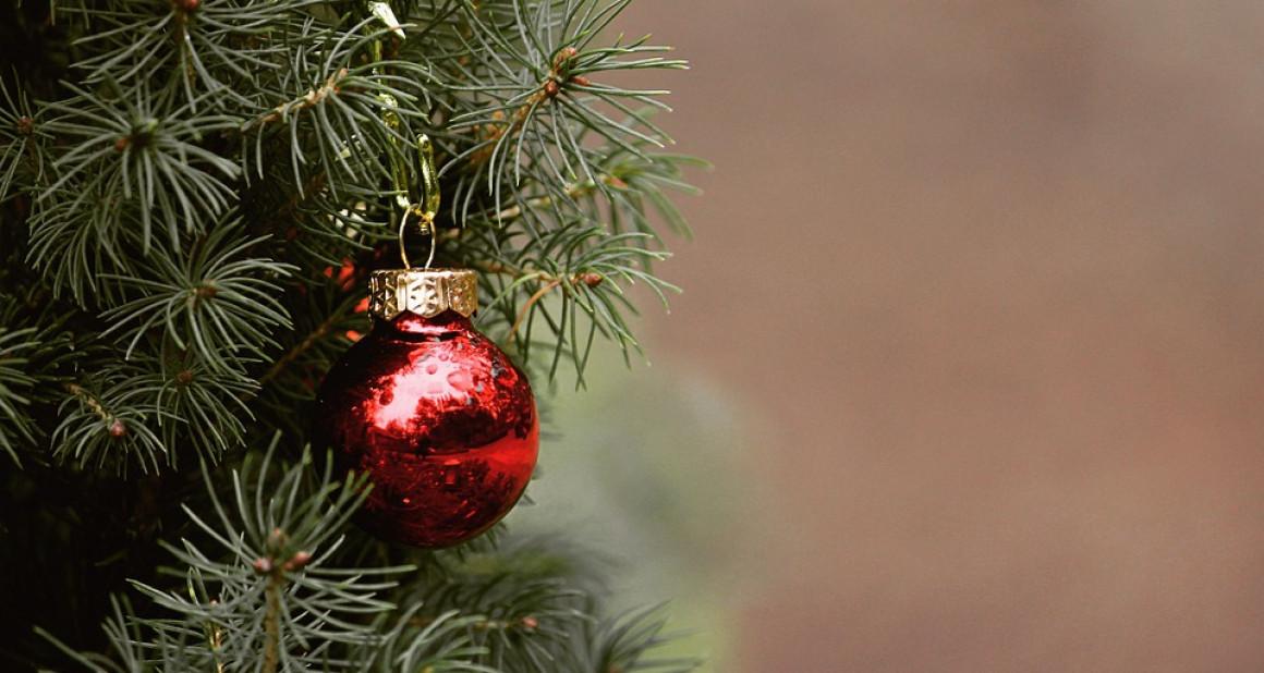 Новая елка красит Соборную площадь в Ульяновске