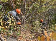 В Ульяновке начали вырубать деревья, мешающие обзору на Волгу