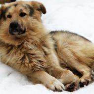 В России хотят ввести 50-тысячный штраф за выгул собак без намордника