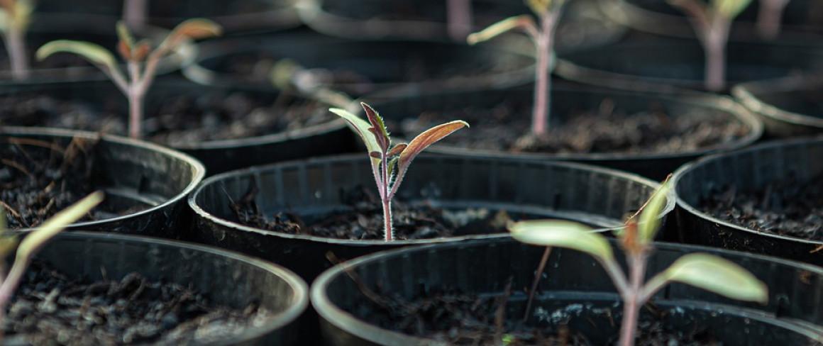 В Ульяновске планируют массовую высадку деревьев и кустарников