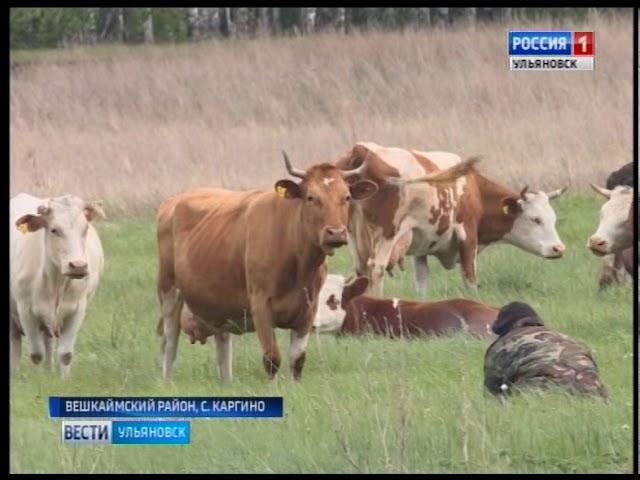 Новости Ульяновска: О нарушительницах ПДД, принципиальных инспекторах и обескураженных сельчанах офи
